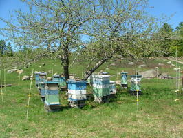 Bee Hives in the fields