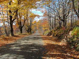 view down campbell lane in the fall