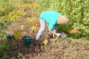 Woman hand raking