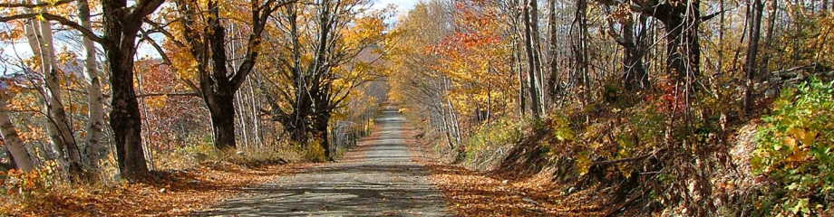 Road in autumn near the farm
